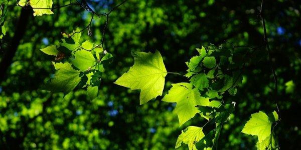 Installer une climatisation naturelle pour rafraîchir son habitat